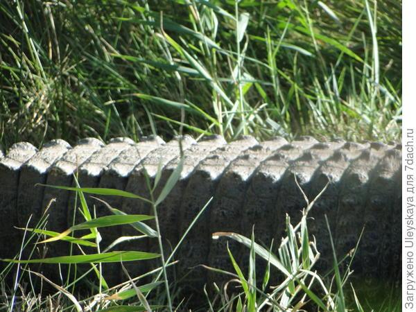 Хвост настоящего крокодила