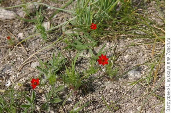 Незнакомое красное растение