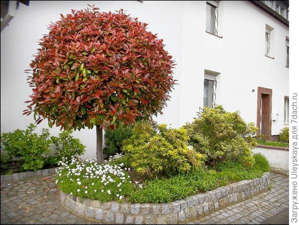 Фотиния Фразера у входа в дом, фото сайта www.schoen-eventagentur.com