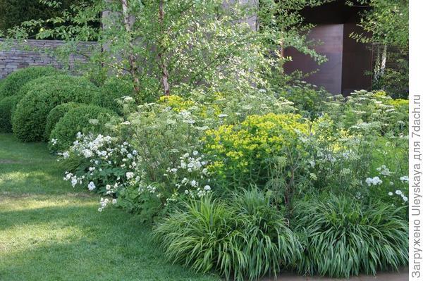 Дудник лекарственный в миксбордере с другими травами, фото сайта naturalisticgardenart.blogspot.com