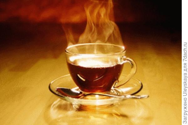 Чай из хаменериона узколистного, фото сайта vorotila.ru