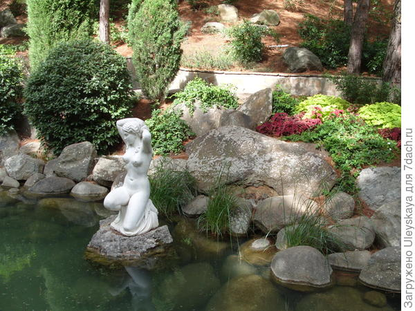 Колеусы в саду у водоема