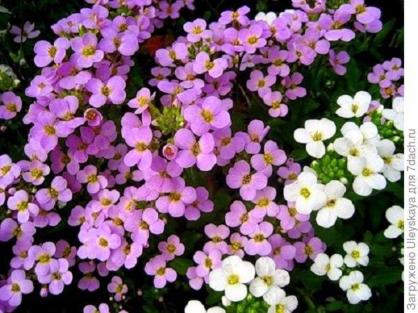 Резухи, фото с сайта vk.com