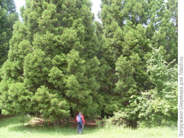 Рядом с величественным деревом