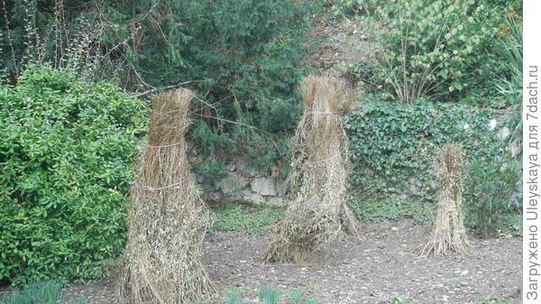 Укрытие снопиками из сухих растительных остатков