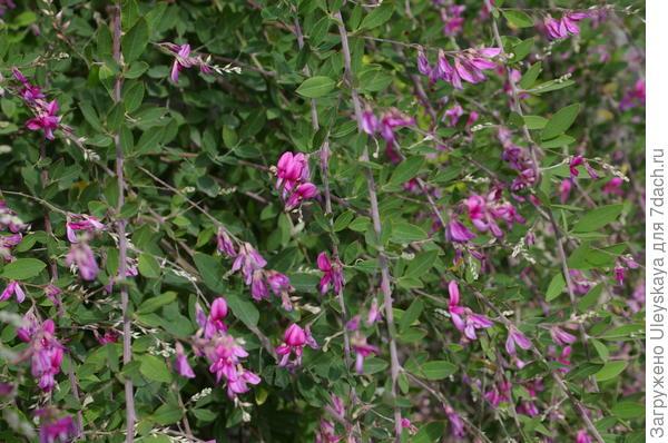 Максимально приближенные цветки