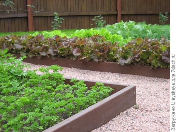 Декоративный огород, фрагмент с салатами, фото сайта svoya-izba.ru