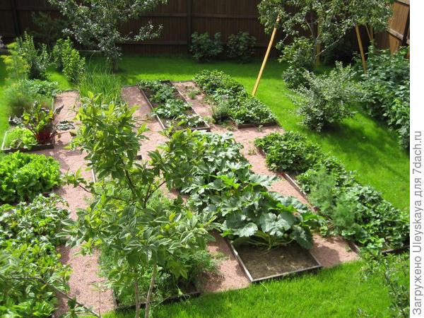 Декоративный огород - удачное решение, фото сайта www.peredelka.tv