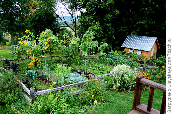 Декоративный огород на даче, фото сайта kvarfoto.