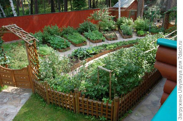 Декоративный огород с пряными растениями, фото сайта svoya-izba.ru
