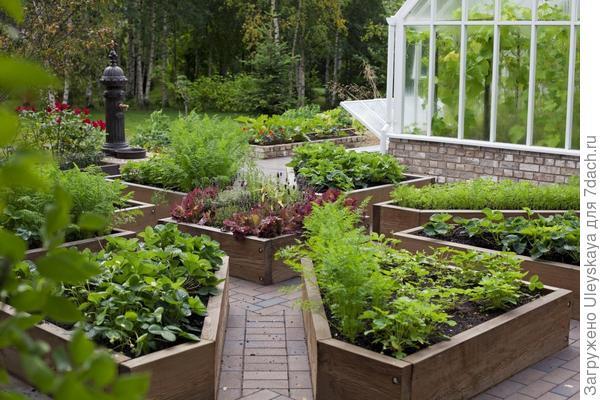 Декоративный огород - изюминка сада, фото сайта xn--80abh4ars.xn--p1ai