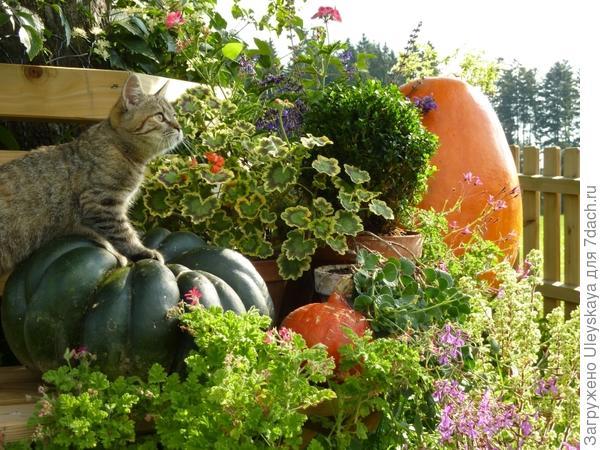 Декоративный мини-огород, фото сайта remstd.ru