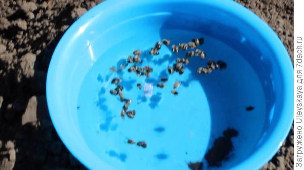 Синий тазик с водой для ловли оленки мохнатой, фото с сайта www.youtube.com