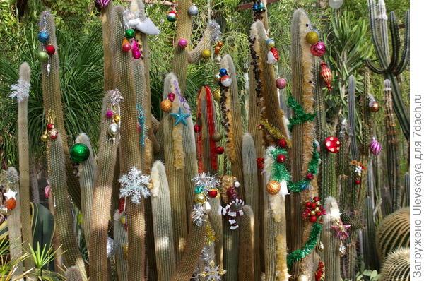 Южное Рождество тоже скоро