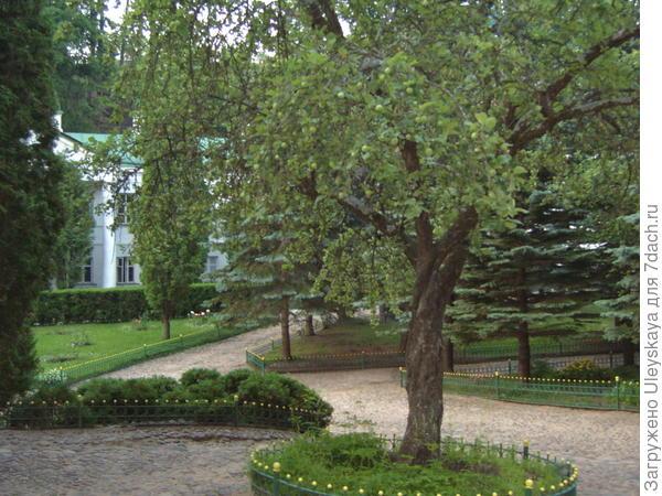 Яблоня на территории Псково-Печерского монастыря