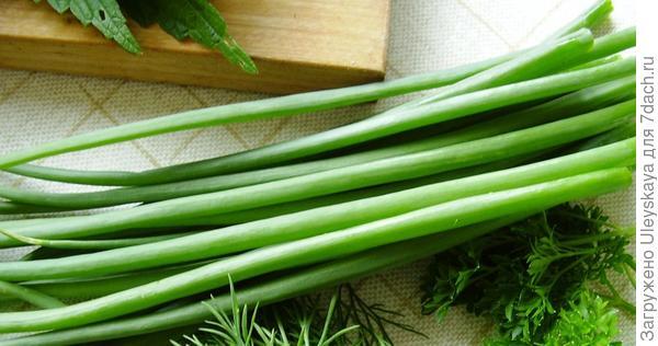 Зеленый лук готов к употреблению, фото сайта supersadovod.ru
