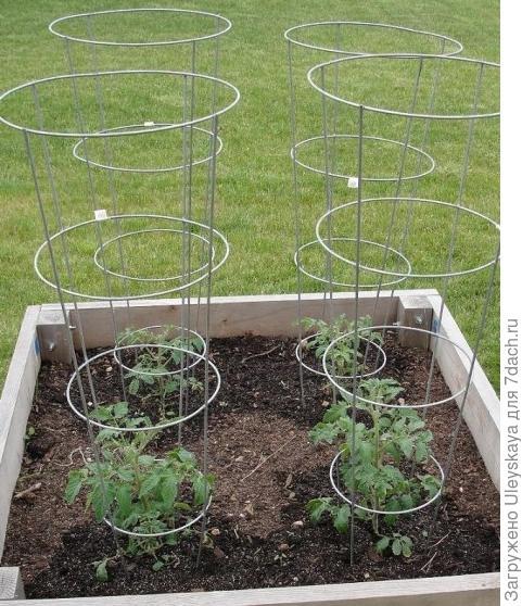 Опоры для высоких томатов, фото сайта rusgef.ru