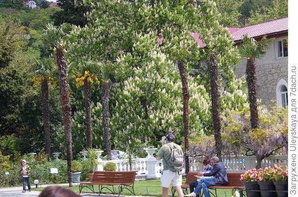 Майским днем в Никитском ботаническом саду