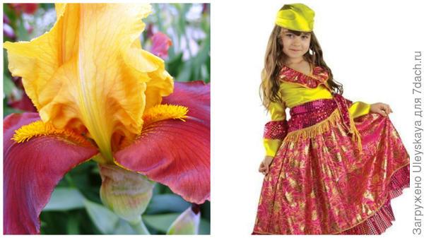 Ирис и маленькая цыганка, фото сайта www.vkostume.ru