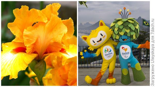 Ирис и талисманы летней олимпиады в Рио-де-Жанейро 2016, фото сайта lenta.ru2500 × 1668