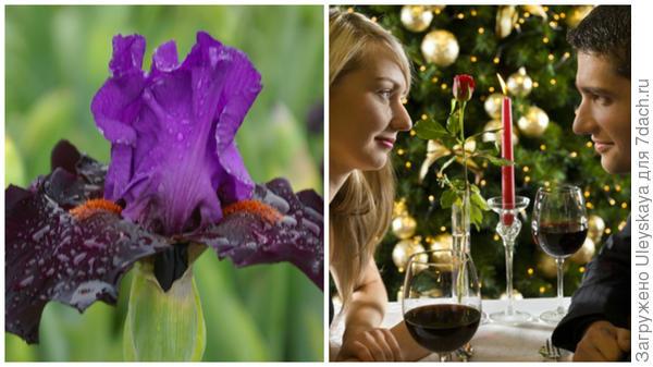 Ирис и романтический вечер, фото сайта superdeal.i.u
