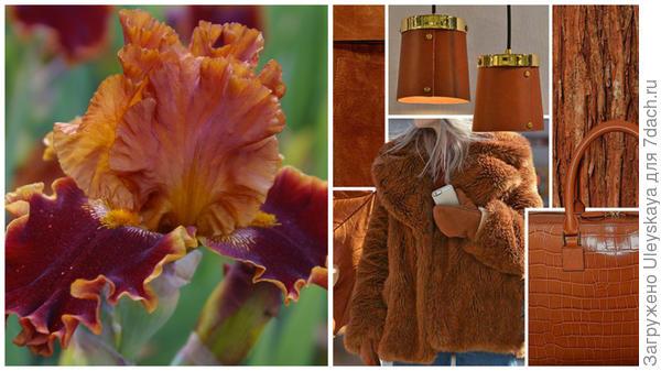 Ирис сорт Copatonic и цвет гончарной глины в модном тренде, фото сайта fchannel.ru