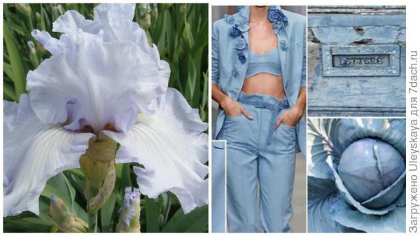 Ирис сорт Silverado и серо-лавандовый в модном тренде, фото сайта fchannel.ru