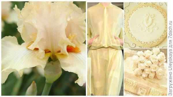 Ирис сорт Нежность и цвет крем-брюле в модном тренде, фото сайта fchannel.ru