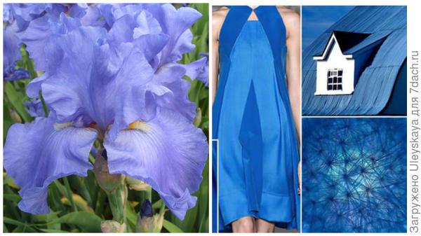 Ирис сорт Jean Hoffmeister и цвет преванш в модном тренде, фото сайта fchannel.ru