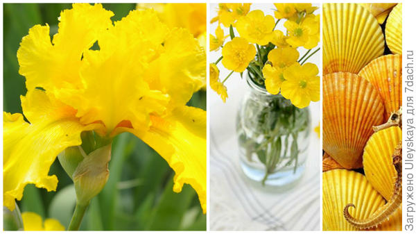 Ирис сорт Temple Gold и цвет лютик в модном тренде, фото сайта sokolov.ru