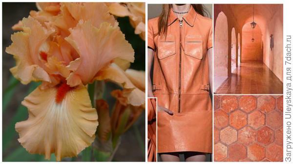 Ирис сорт Island Sunset и персиковый цвет в модном тренде, фото сайта fchannel.ru