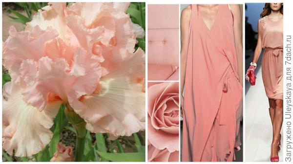 Ирис сорт Paradise и лососевый в модном тренде, фото сайта fchannel.ru
