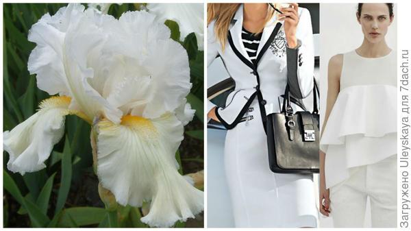 Ирис сорт Белые Ночи и белый цвет в модном тренде, фото сайта urbastion.ru
