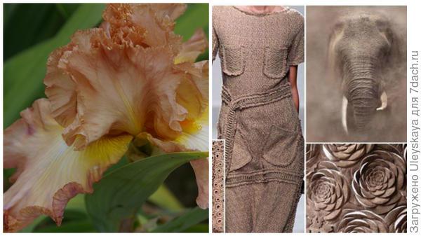 Ирис сорт High Roller и дымчатый коричневый в модном тренде, фото сайта fchannel.ru
