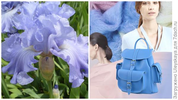 Ирис сорт Delta Blues и цвет серенити в модном тренде, фото сайта hochu.ua