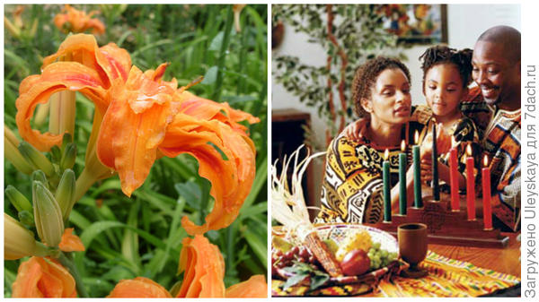 Слева цветок сорта Kwanzo, справа афроамериканский праздник, фото сайта www.molomo.ru