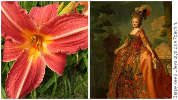 Слева цветок сорта Cherry Lace в моем объективе, справа вишневые кружева фото сайта www.liveinternet.ru