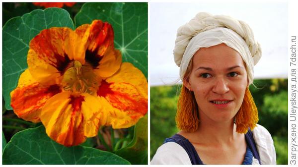 Цветками настурции большой можно окрашивать сыры, участница Крымского исторического фестиваля приготовилась к покраске