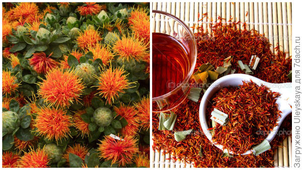 Сафлор красильный, фото сайта vk.com, сырье сафлора красильного, фото сайта ru.depositphotos.com