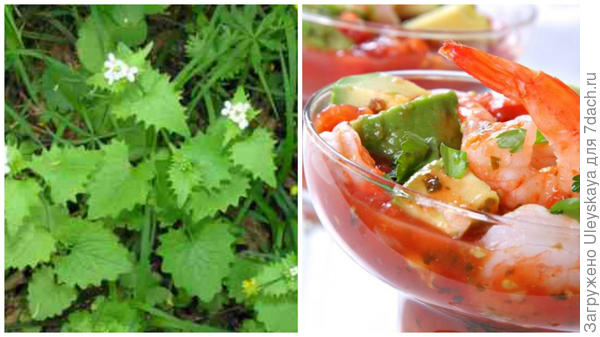 Чесночница лекарственная, фото сайта www.rasteniya-lecarstvennie.ru, блюдо с чесночницей, фото сайта photosflowery.ru