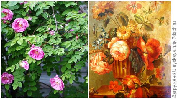 Шотландская роза сорт Poppius, фото сайта flower.onego.ru; букет старинных роз, фото сайта vignettedesign.net