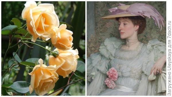 Чайная роза сорт Lady Hillingdon, фото сайта mooseyscountrygarden.com, леди Хиллингтон, фото сайта mallettantiques.com