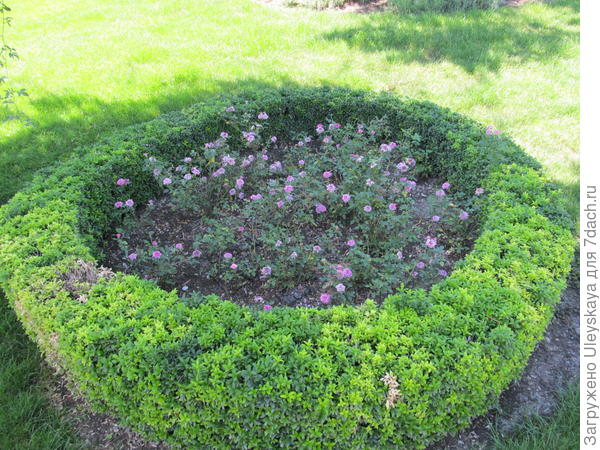 Миниатюрные розы в кругах
