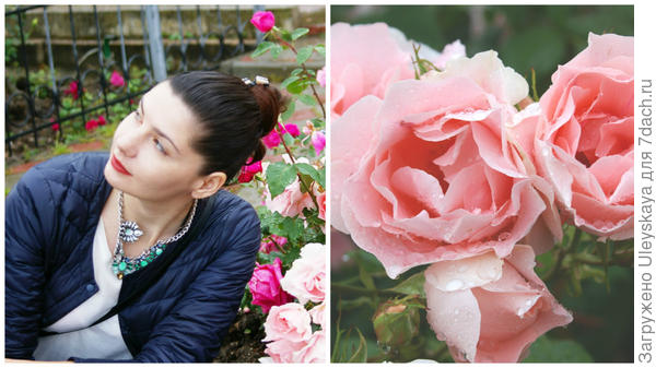 Эмоции и роза