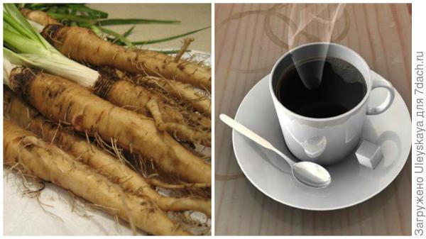 Корнеплоды козлобородника пореелистного, фото сайта www.patee.ru, суррогатный кофе, фото сайта beautycoffee.com.ua