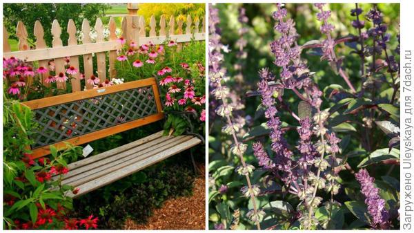 Душистый цветник у лавочки, фото сайта www.asienda.ru; душистый базилик