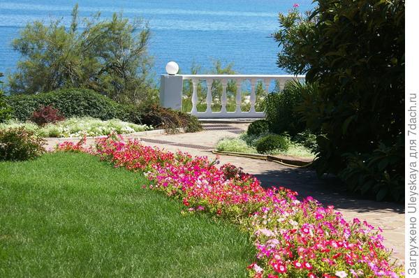 Цветник из петунии источает в летний день тонкий сладко-перечный аромат