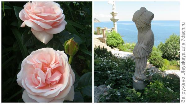 Роза сорт Aphrodite, фото сайта Procvetok.com и Венера Милосская (Афродита у римлян) на Южном берегу Крыма
