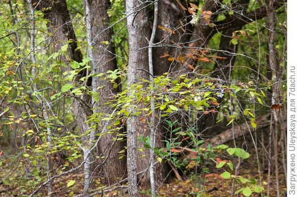 Фрагмент осеннего леса