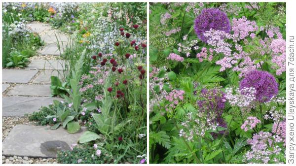 Бутень волосистый Roseum в саду природного стиля, фото сайта Shoot и он же с луками фото сайта Out of my shed